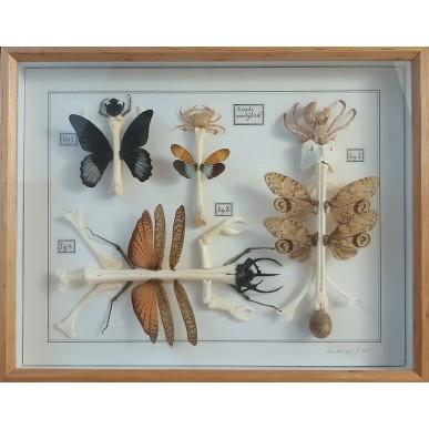 obrázek Jan Švankmajer - Kosti motýlové