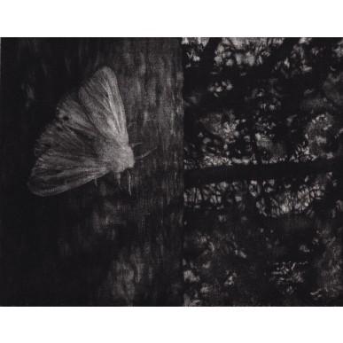 obrázek Lenka Falušiová - Noční motýl