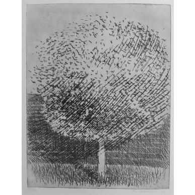 obrázek Marie Blabolilová - Strom u silnice